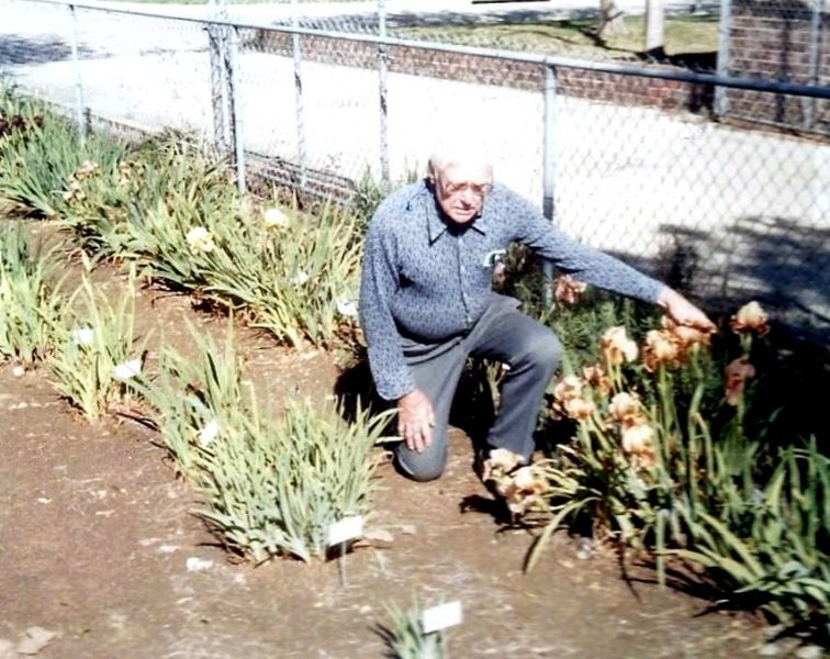 Rudi in his iris garden, March 1985