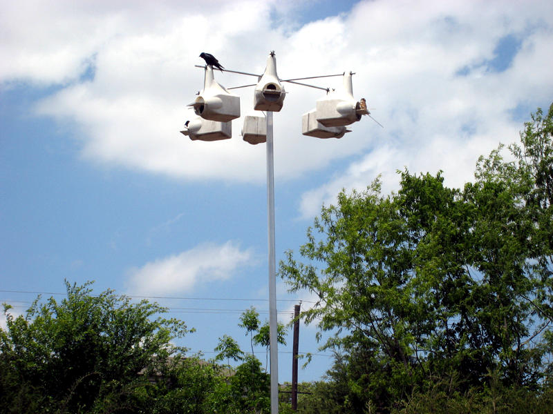 A purple martin condominium overlooking the master planting (Photo by Judy Nunn)