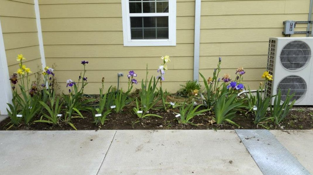 2015-04-03 VA bed in bloom